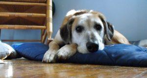 Sad Dog With Anxiety