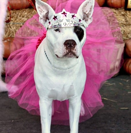 Wacky Dog Name Winner Isabella Miss Worldwide Boo Boo
