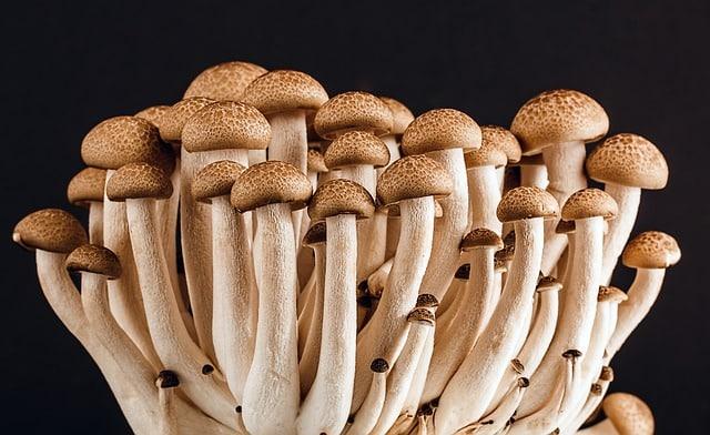 mushroom, fungi, fungus