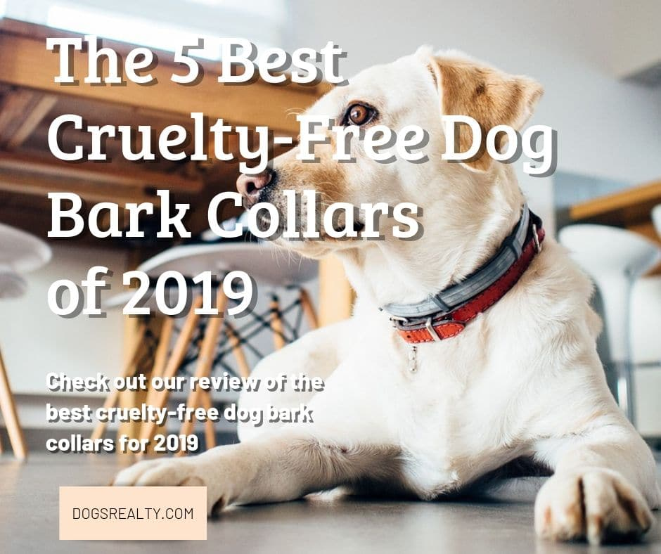 The Best Cruelty Free Dog Bark Collars Reviewed