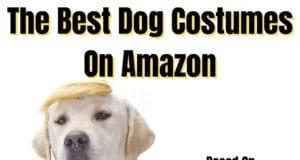 Best Dog Costumes Ideas