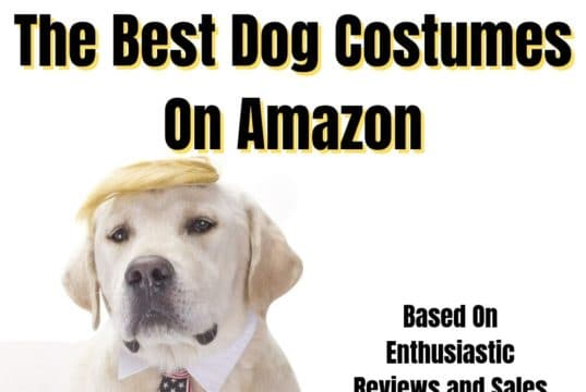 Best Dog Costumes Ideas