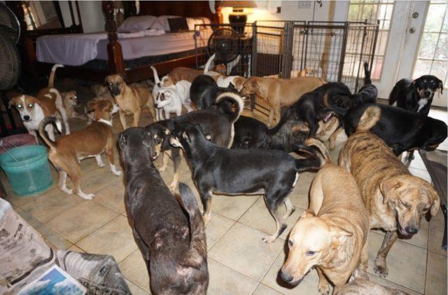 Dogs and Hurricane Dorian