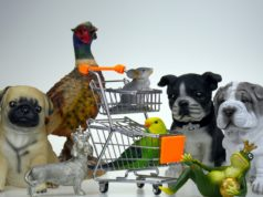 Dog Shopping