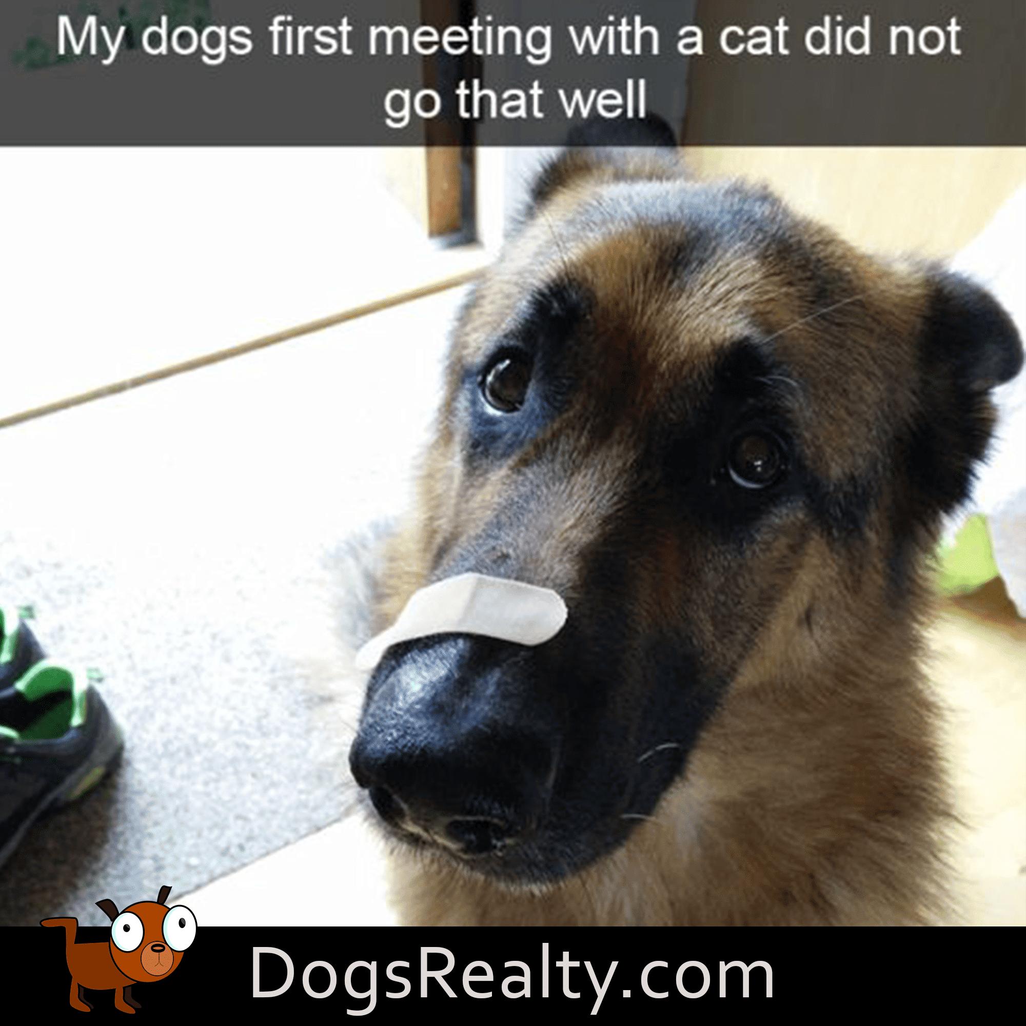dog meme cat meeting didn't go well
