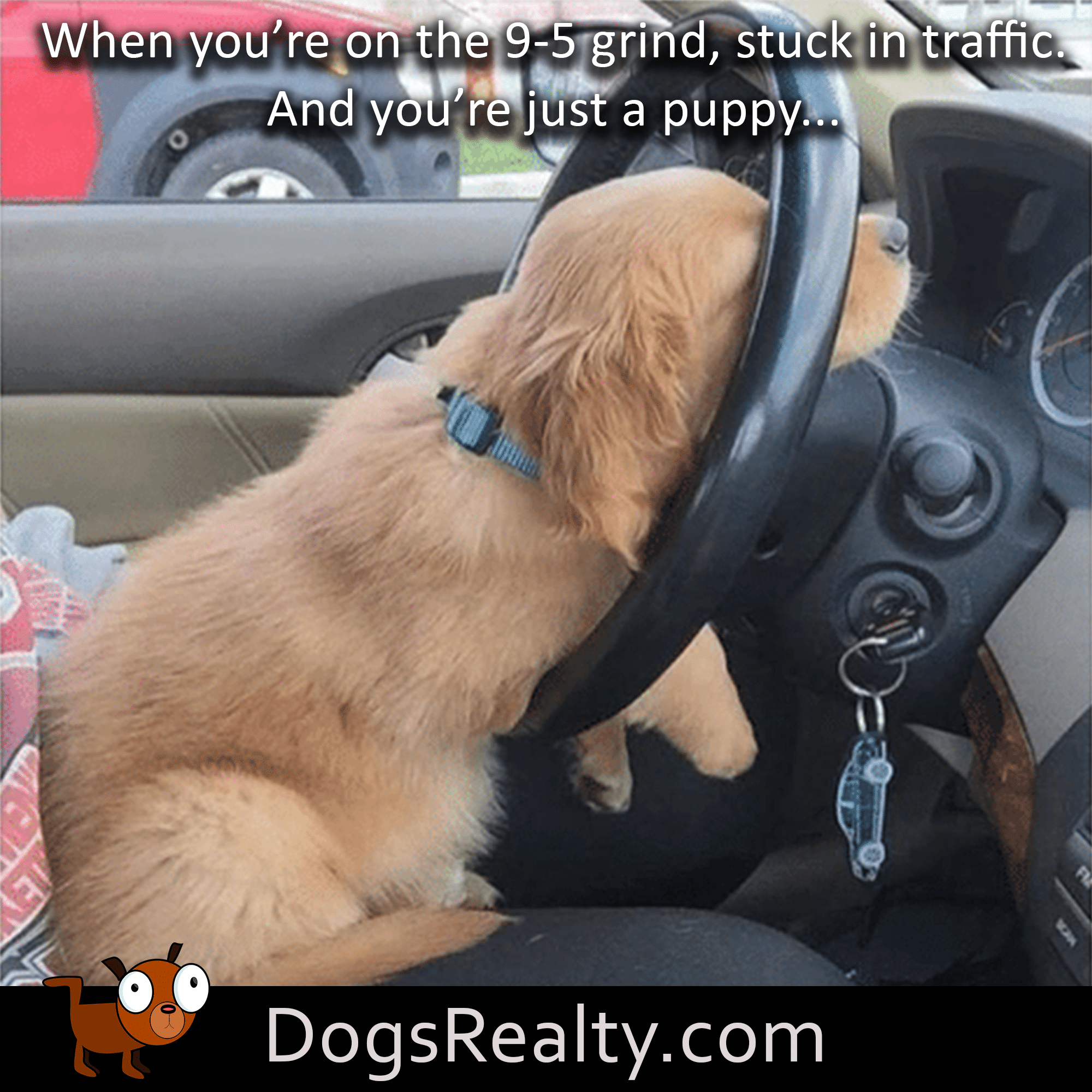 dog meme Stuck In Traffic