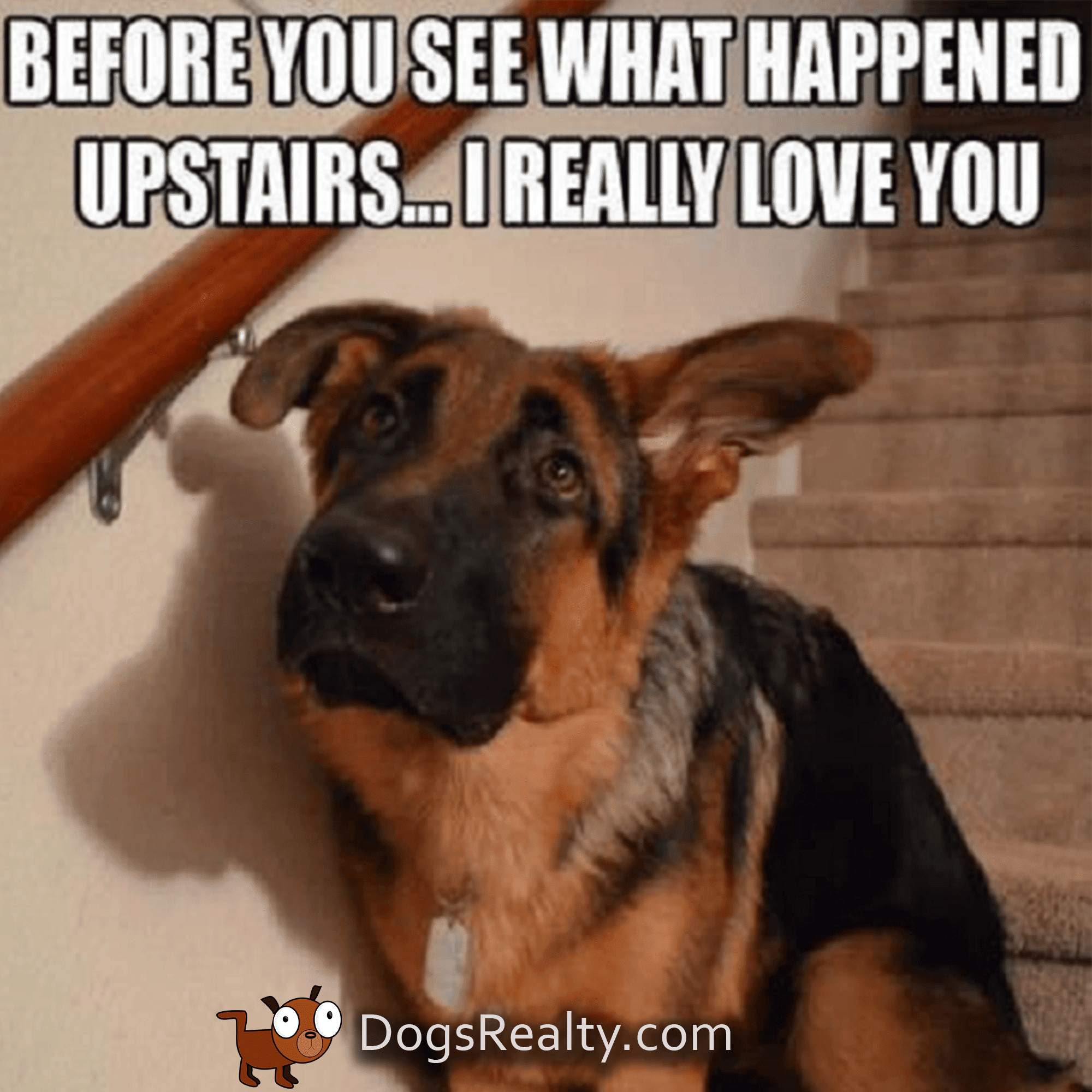 Dog Memes Before You Go Upstairs