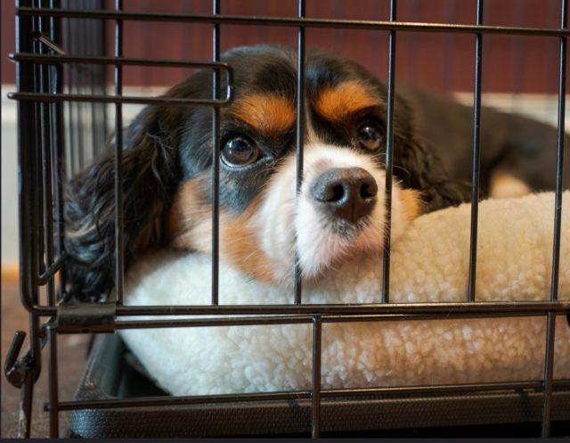 Cute Dog In Crate