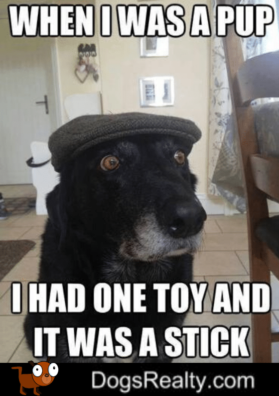 Dog Meme When I Was Young