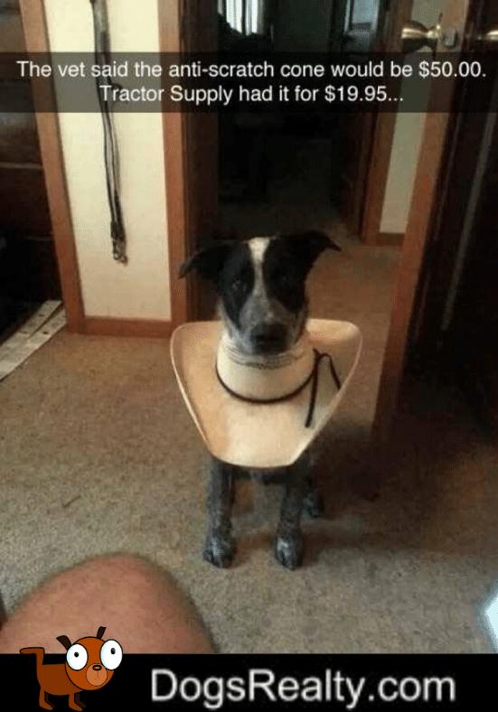 Dog Meme Alternative To A Cone