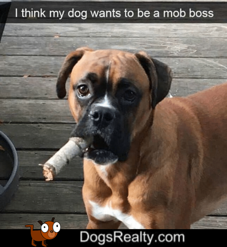 Dog Meme Mob Boss