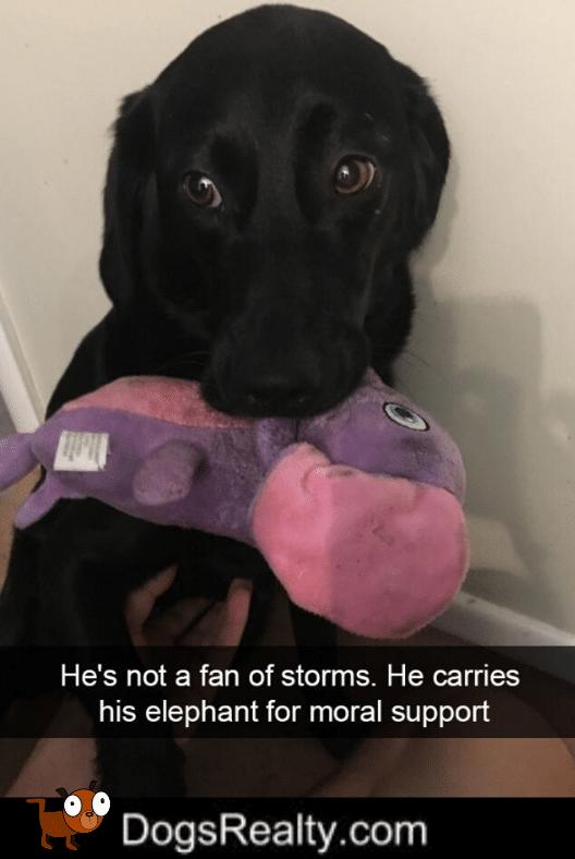 Dog Meme Not A Fan Of Storms