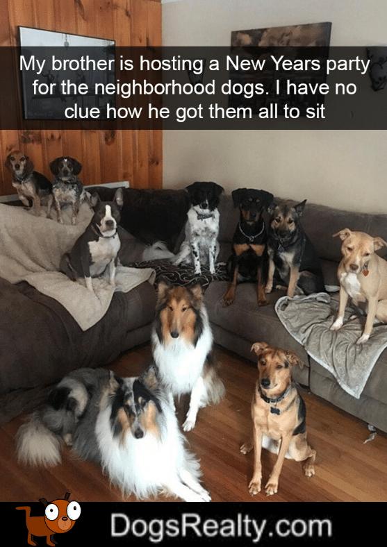 Dog Meme Dogs Sitting Still