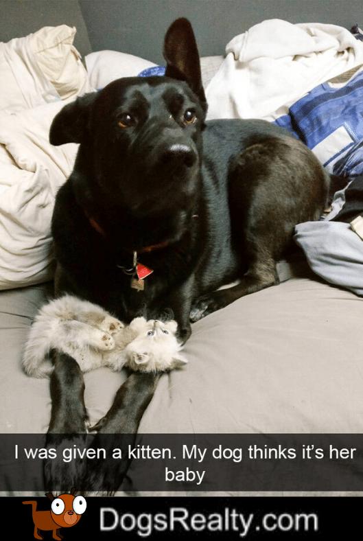 Dog Meme Cute Kitty
