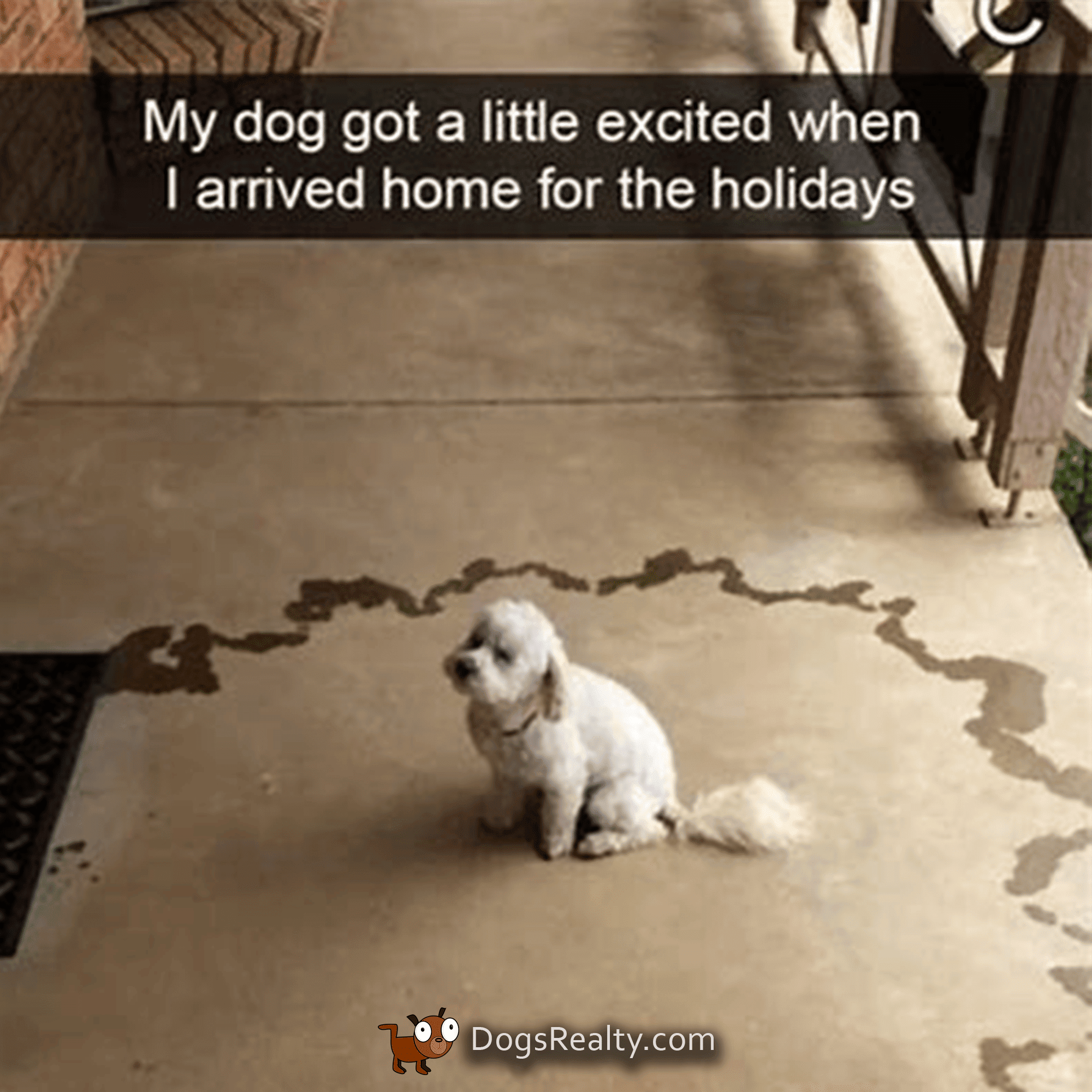 Dog Meme Excited Dog Pees On Floor In A Circle