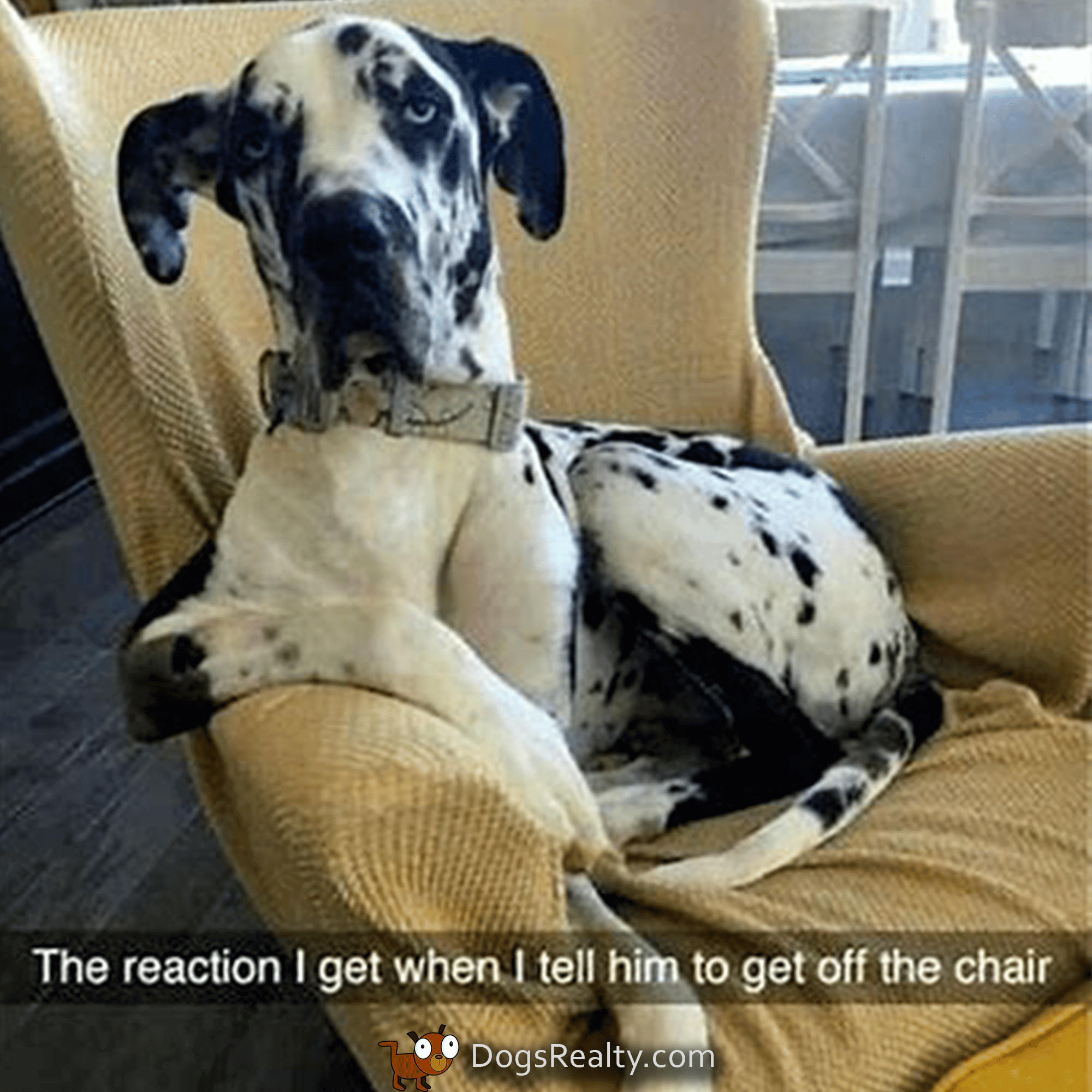 Dog Meme Get off the chair