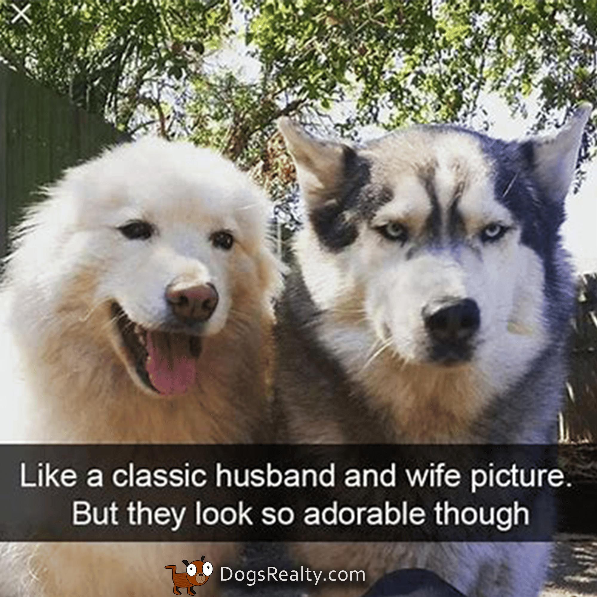 Dog Meme Husband and Wife