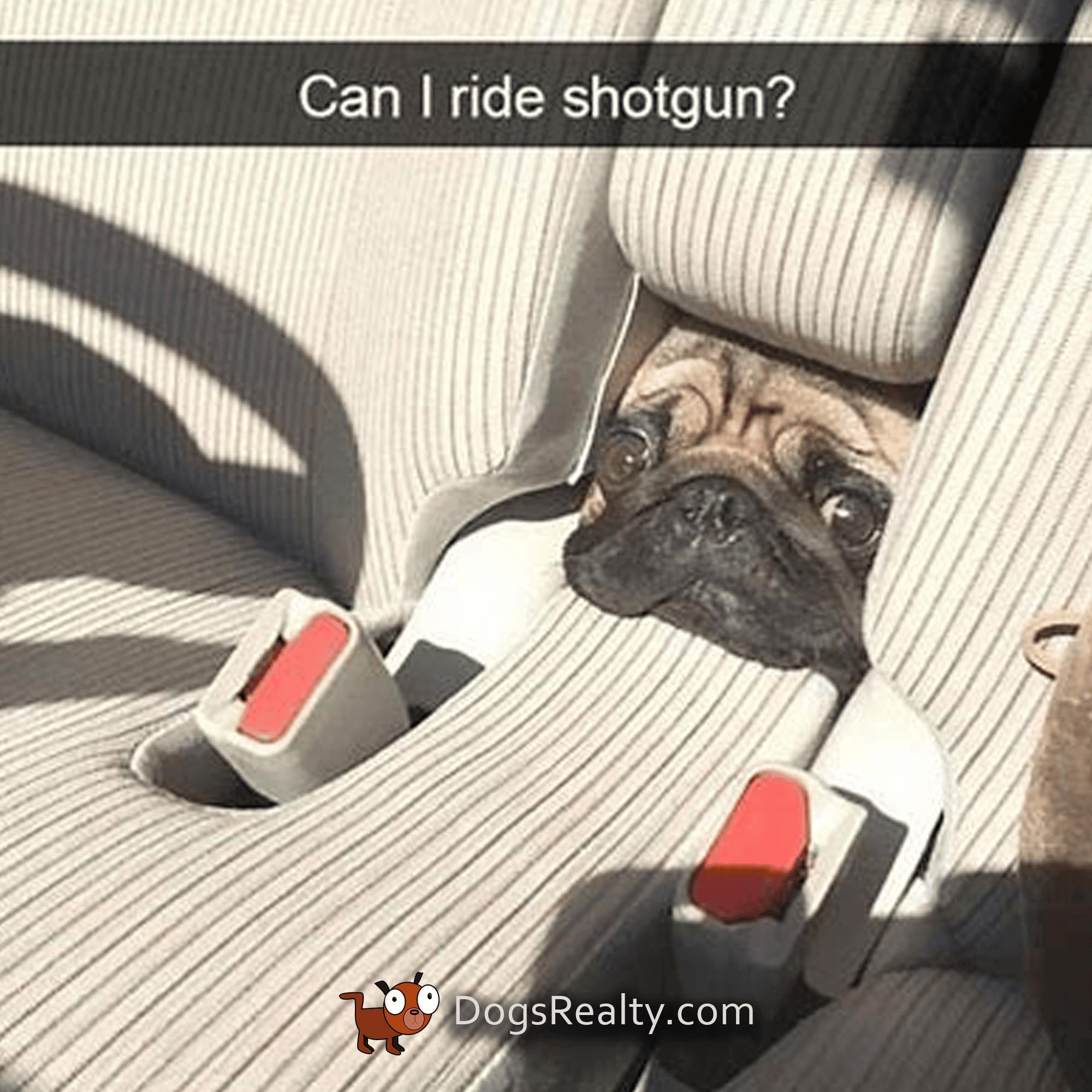 Dog Meme shotgun