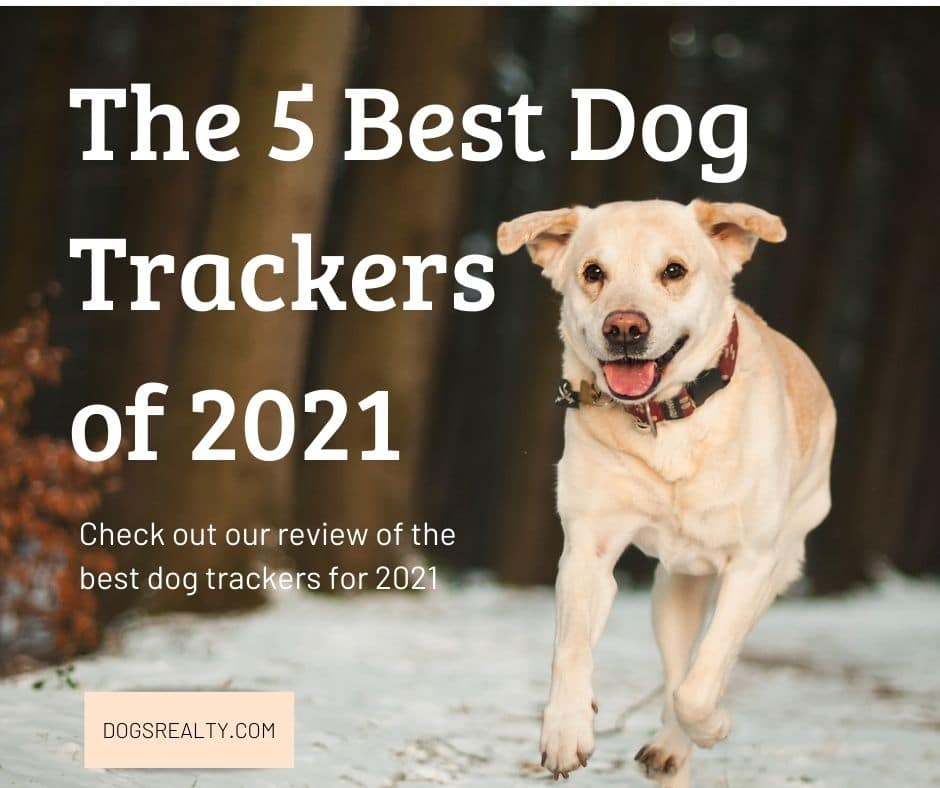 The 5 Best Dog Trackers of 2021 Review